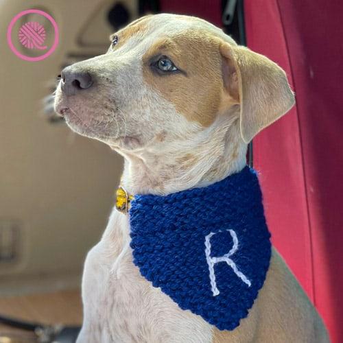 needle knit pet bandana modeled by Rudy